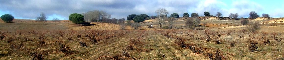Der Weinberg Los Colmillos wurde 1870 gepflanzt