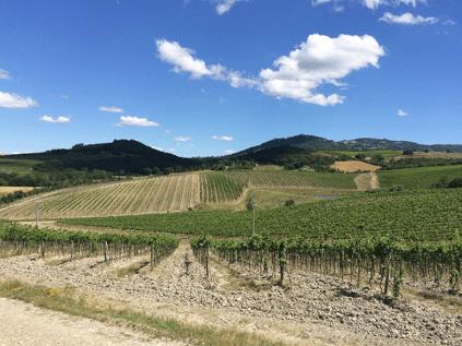 Die Hügel des Montalcino