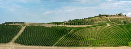 Vineyards around Montepulciano
