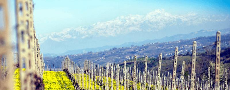 Ein Blick über die Weinberge von MGM Mondo del Vino
