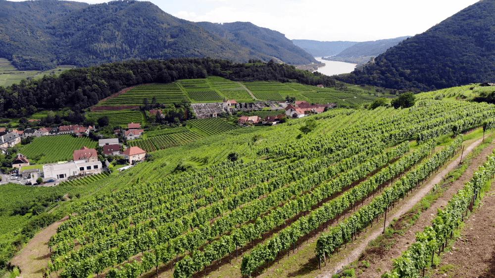 Die Weinberge von Gritsch