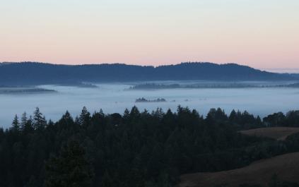 Nebel über dem Anderson Valley