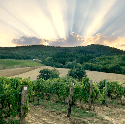 Frescobaldi vineyard sunset