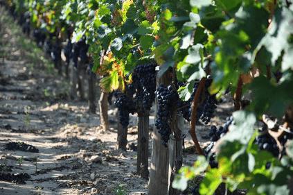 Impression der Weingärten