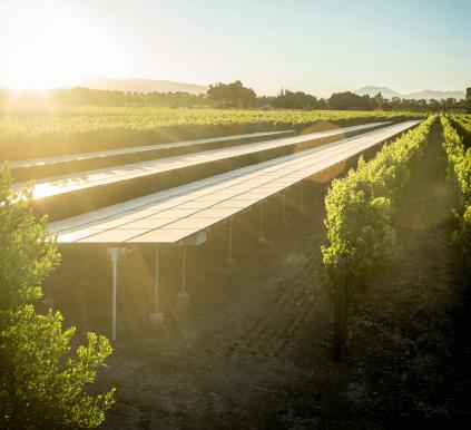 Blick über die Weingärten von Silver Oak