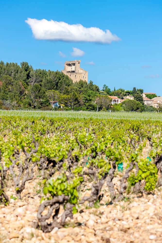 Wijnstokken bij Châteauneuf-du-Pape
