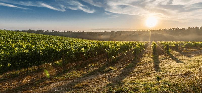 Weinberge von Citra Vini