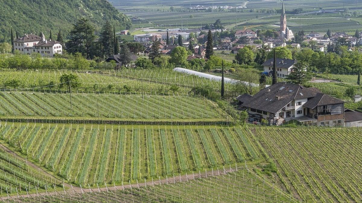 Terlan in South Tyrol