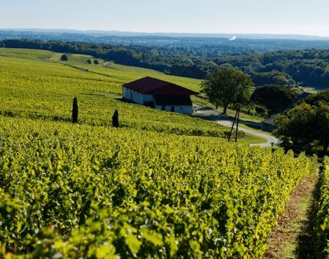 Die Weinberge von Château Fontaine Audon