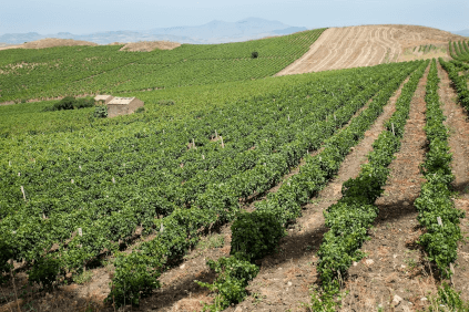 The hills of Trapani