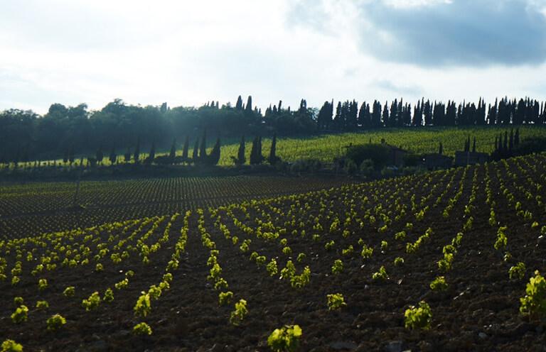 Die Weinberge von Zonin