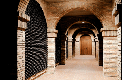 View into the modern cellar