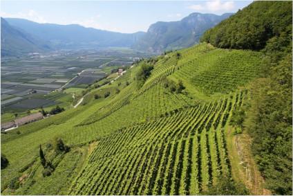 The Frauenrigl vineyard of the Peter Zemmer Winery