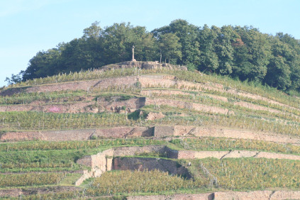 The steep vineyards with the distinctive terraces