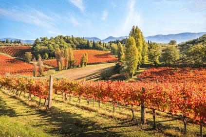 Vineyards in Umbria