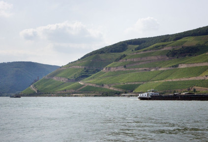 The Rhine reveals a very special terroir for Georg Breuner wines