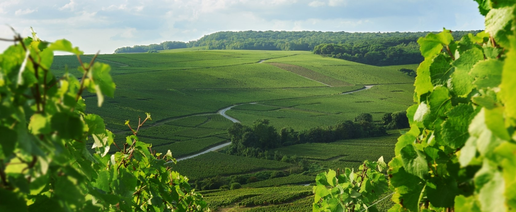 The vineyards of the Maison Charles Heidsieck