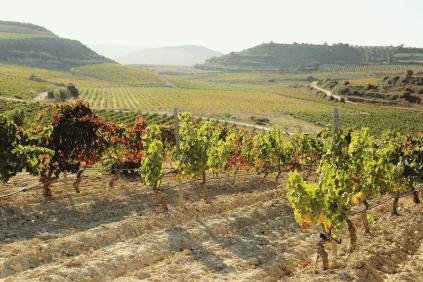 Blick über die Weinberge der Familie Chávarri