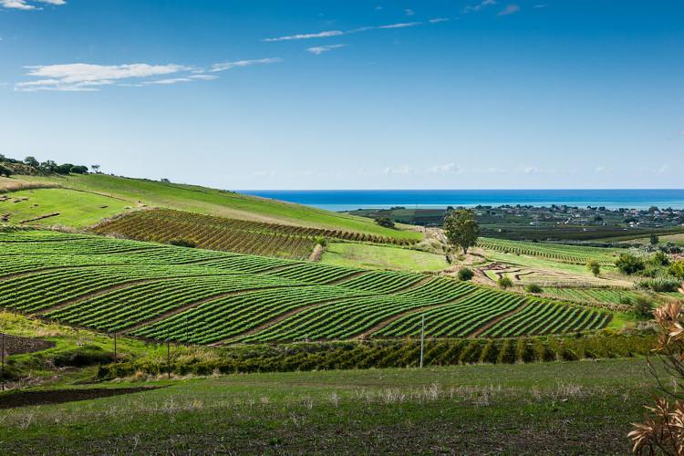 Weingut auf Sizilien