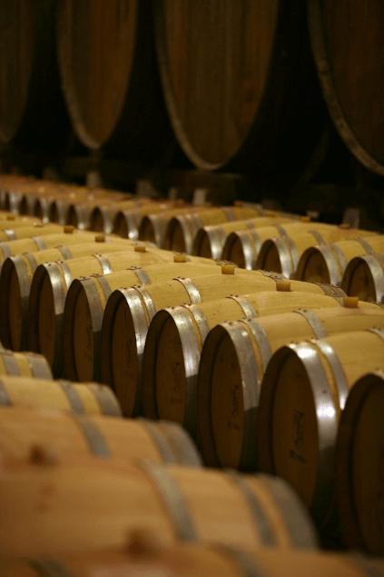 In the wine cellar of DFJ Vinhos