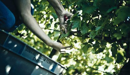 Manual harvest by William Fevre