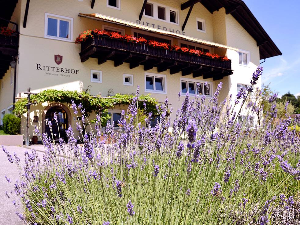 Weingut-Tenuta-Ritterhof5874e3580d723
