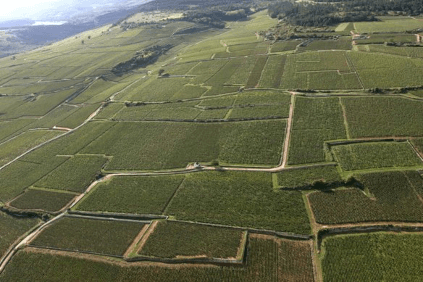 The vineyards from above