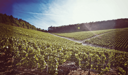 Vine rows from William Fevre