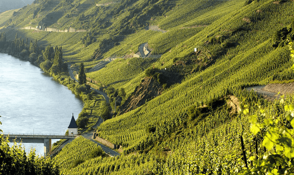 View of the vineyards by Rosch