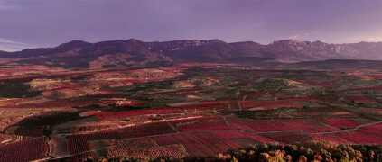 Dinastia Vivanco Rioja