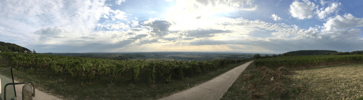 The vineyards of Lukas Kesselring in the Palatinate
