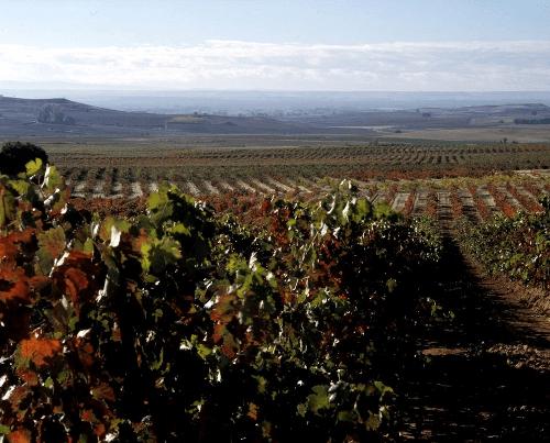 Weinberge von Aster in der Ribera del Duero