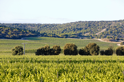 Vineyards of Abadia Retuerta