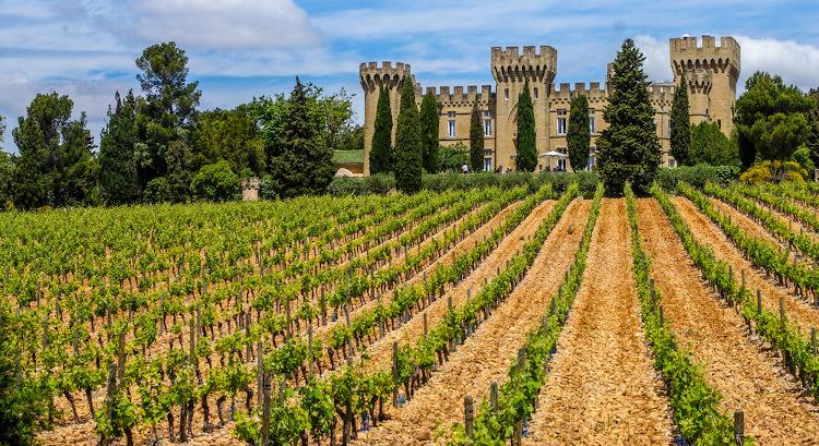 Wijngaard bij Châteauneuf-du-Pape
