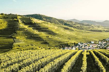 Vineyards of Franz Keller