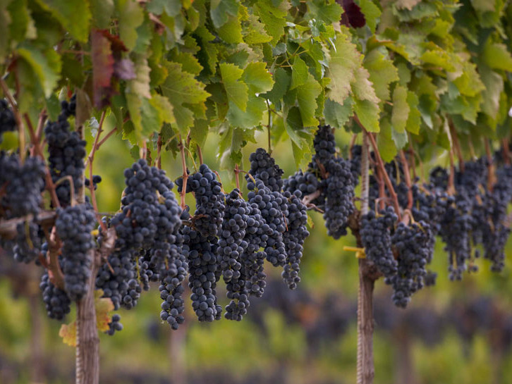 Vesevo Weingut Kampanien