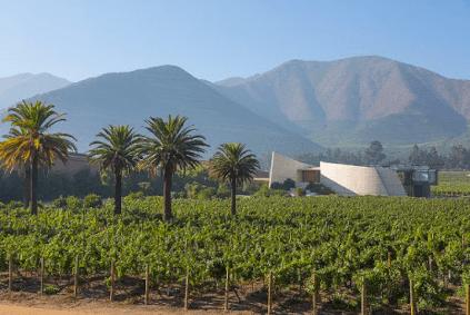 Weingarten Vina Errazuriz
