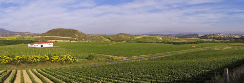 The vast vineyards of Bodegas Muga