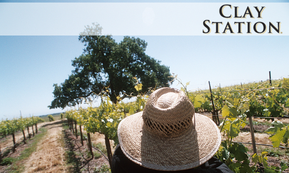 Clay Station Vineyard