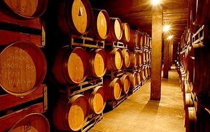 In the wine cellar of Delheim