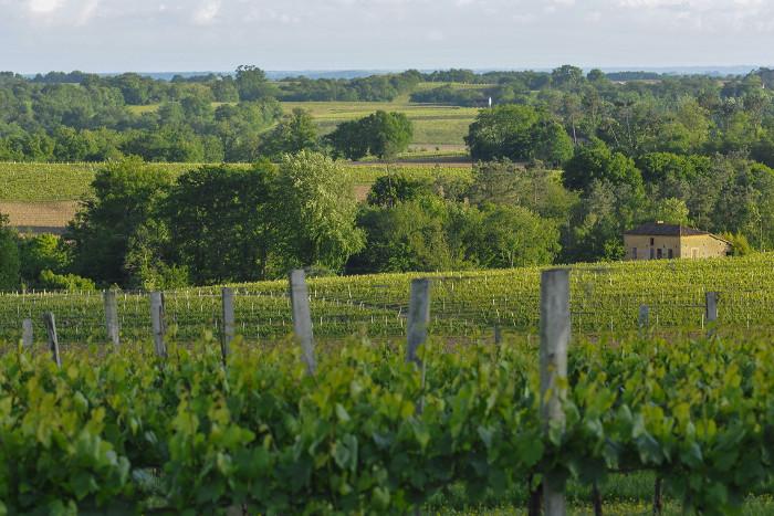 Die Weinberge von Plaimont
