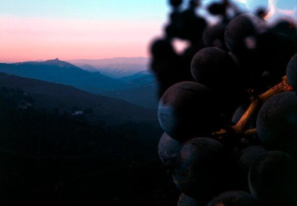 Grapes of Quinta do Portal