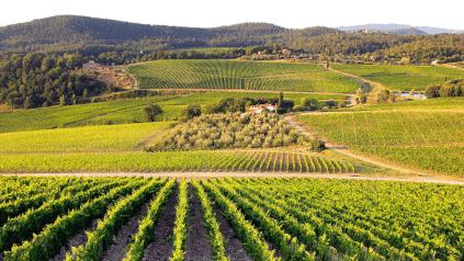 Castello di Nipozzano Vineyard