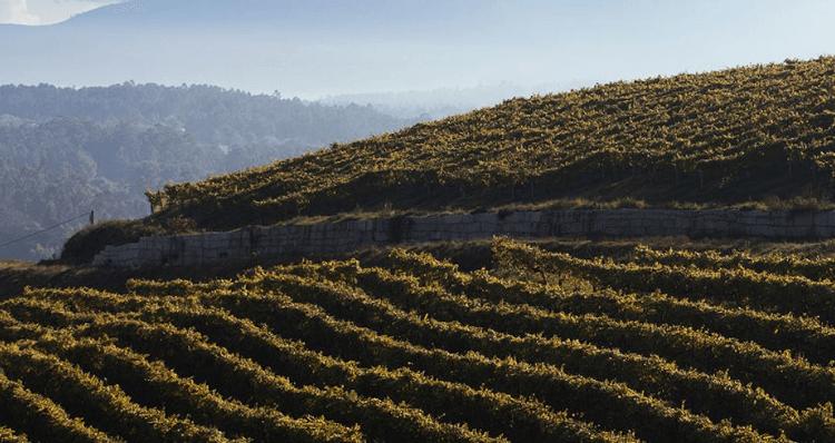 weitläufige Weinberge von Bodegas Fillaboa