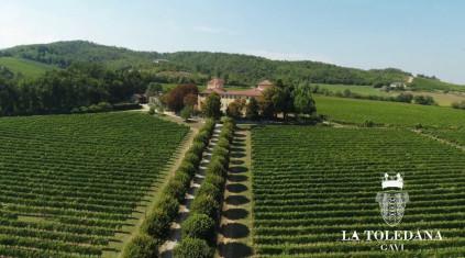 La Toledana vineyard in Piemont