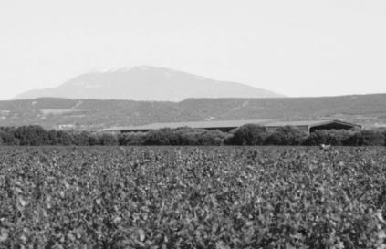 Wein im Tal
