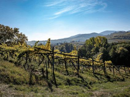 Vineyard from Rebholz