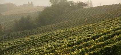La Scolca Weingärten bei Gavi