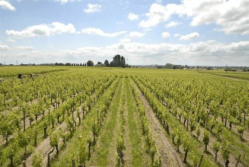 Rebflächen von Chateau Gombaude Guillot