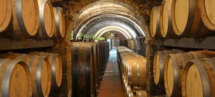 Der Keller der Fattoria Ormanni